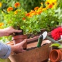 Your Essential Early Spring Planting Checklist